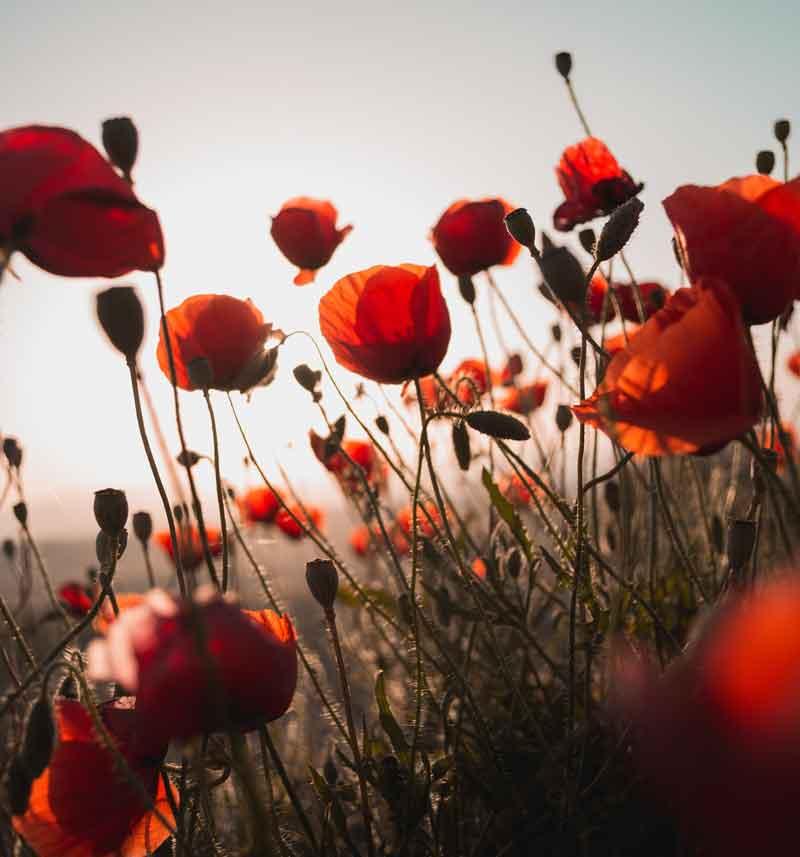 Esprit Feng Shui par les fleurs et la couleur rouge, harmonie des couleurs